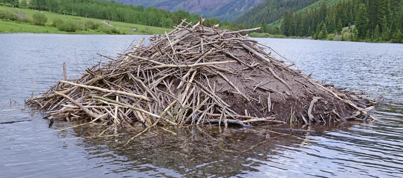 beaver dam 800 beaver builder Beaver Dam Middle School